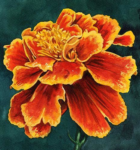 marigold paint ethan by mark satchwill from
