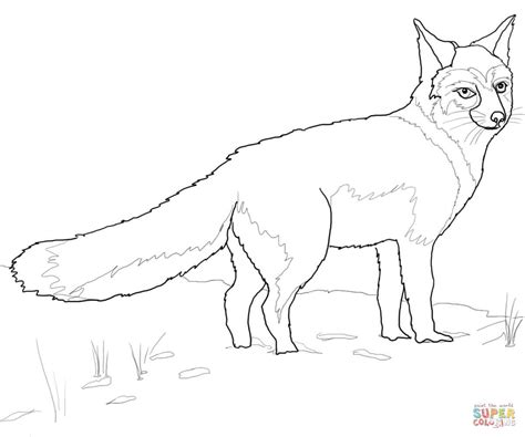 Swift Fox Coloring Page | swift fox coloring page free printable coloring pages