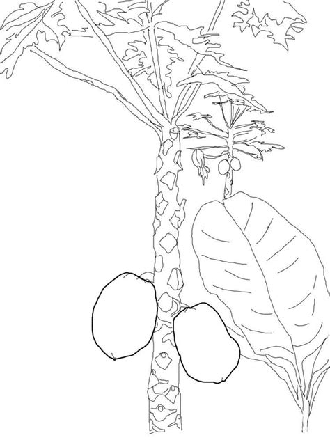mango coloring pages   print mango coloring pages