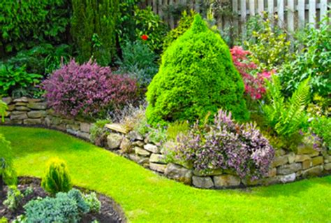 best type of tree for types of evergreens for landscaping trees and shrubs