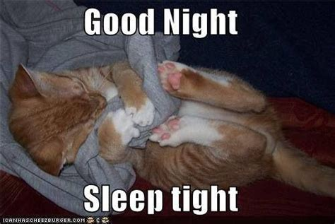 Good Night Meme - awwww good night cute kitty photos pinterest