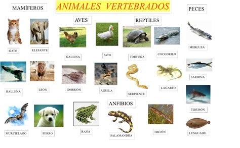 imagenes de animales bertebrados ihmc public cmaps 2