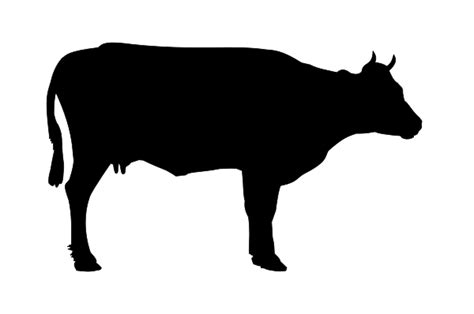 beef cattle clipart clip art library