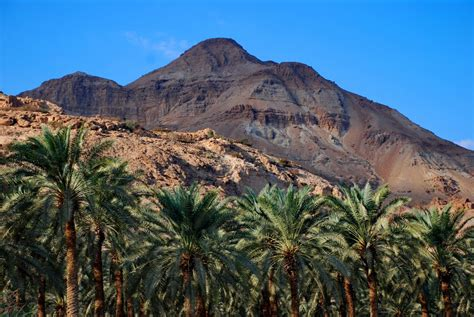 Tropical Desert Plants - panoramio photo of ein gedi nature reserve israel