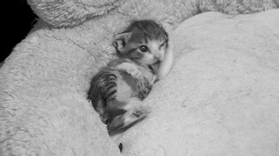 imagenes tumblr gatitos gif tiernos tumblr