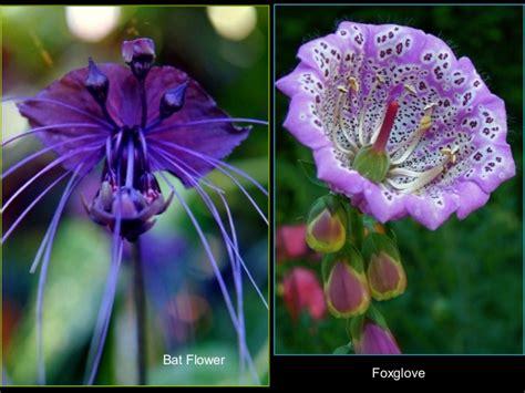 imagenes flores raras flores raras