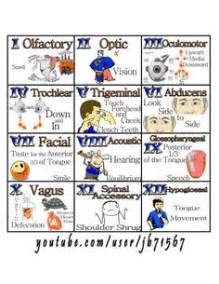 Cranial nerves mnemonic on pinterest pharmacology nursing