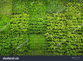 Gardening Indoors - green wall stock photo 130940885 shutterstock