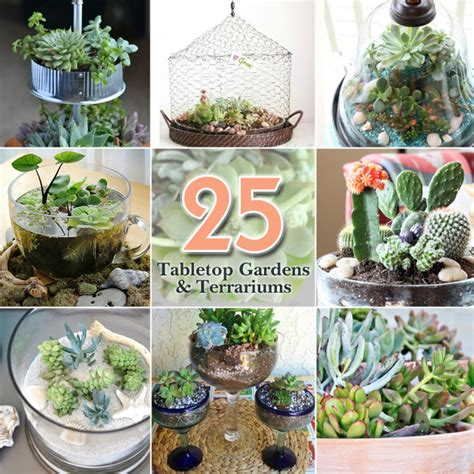 25 best ideas about gardening 25 ideas for tabletop gardens and terrariums pretty