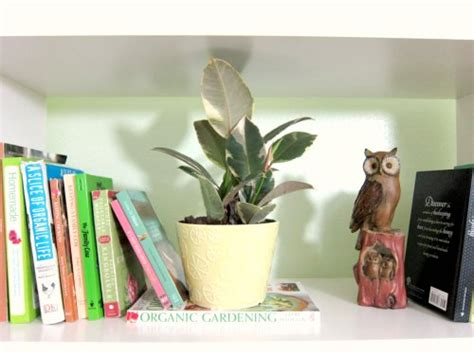 benefits of house plants the benefits to having house plants going home to roost