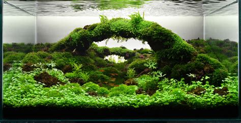 Aquascape Ideas Tropical aquascape indah di pandang mudah di buat gallery aquascape