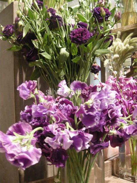 viola fiori fiori viola silviadeifiori