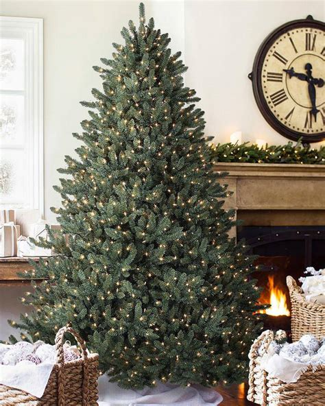 balsam hill tree for sale lancaster pa blue spruce tree balsam hill