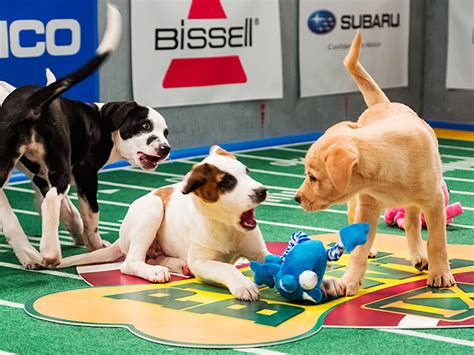 puppy bowl fntsy sports network