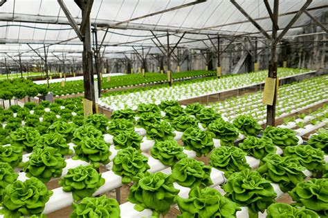 gardening hydroponics ã learn the amazing of growing fruits books the 411 on hydroponics food nutrition magazine