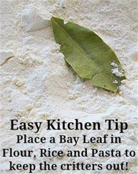 Pantry Moths Bay Leaves by 1000 Images About How To Get Rid Of Quot Weevils Quot On