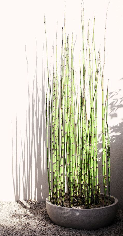piante da veranda oltre 25 fantastiche idee su piante per veranda su