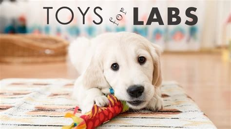 best toys for lab puppies best toys for labs toys model ideas