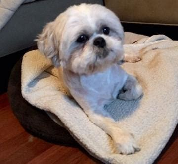 puppies for adoption orlando fl florida rescue adoption pending