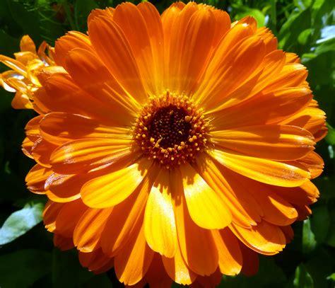 Crop Flower Oc file orange flower 7433774546 jpg wikimedia commons