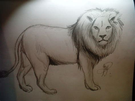 dibujar animales salvajes a lapiz imagui caras de leones para dibujar a lapiz imagui