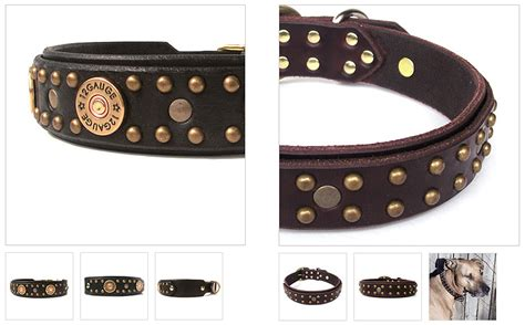 Collars That Bring Karma by A Special Special For You Ontario Pet Photographer