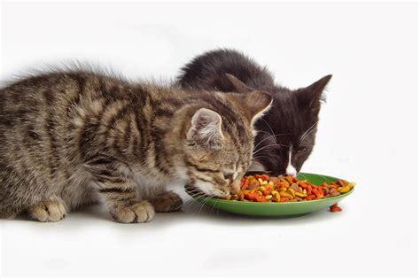 the top cat foods orijen dry adult cat kitten food fun animals wiki videos pictures stories
