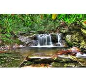 Forest Waterfall Desktop Background Hd Wallpapers 06739