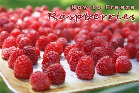how to freeze raspberries raspberry coffee cake recipe