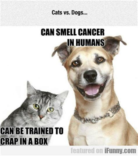 can dogs smell cancer cats vs dogs can smell cancer flaproductions