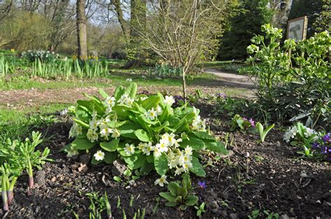Fairhaven Garden by Mothering Sunday Guided Walk At Fairhaven Garden