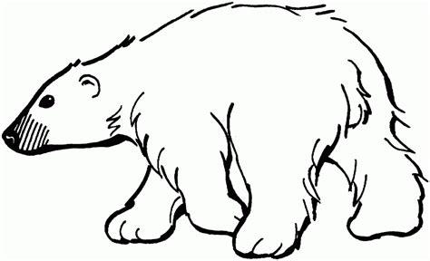 Polar Bear Outline   Coloring Home
