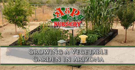 Arizona Vegetable Gardening Guide Arizona Vegetable Garden