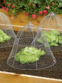 chicken wire plant cloche the green
