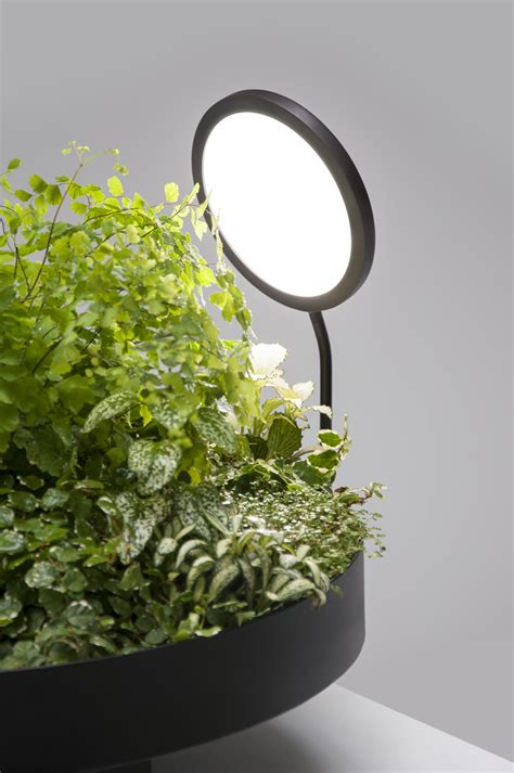 plants that thrive in artificial light viride exploits advances in artificial lighting to help