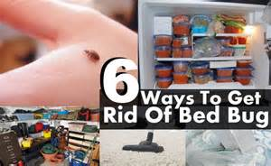 Diy ways to get rid of bed bug diy life martini