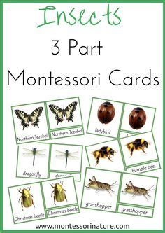 Montessori 3 Part Cards Template by Tree Nomenclature Cards Printable Montessori
