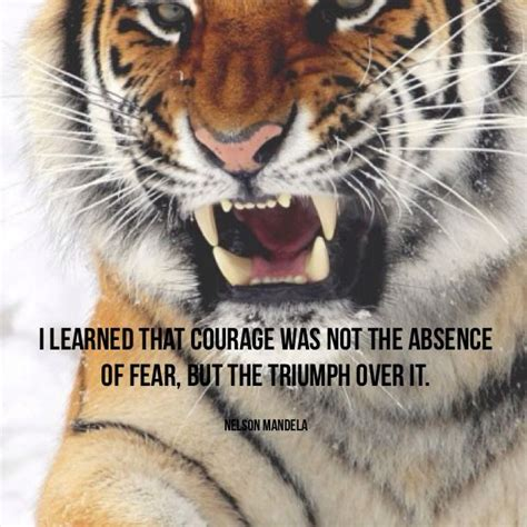 tiger quotes tiger strength quotes inspirational quotesgram