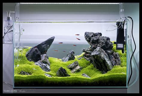 ada aquascape the world s best photos of aquascape and seiryu flickr