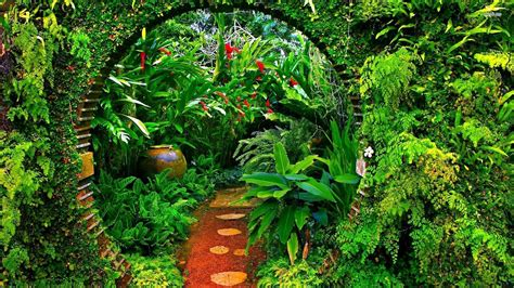 brief garden sri lanka walldevil