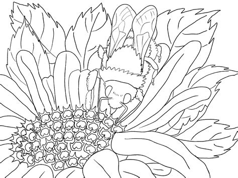outdoor scenery coloring pages coloring pages