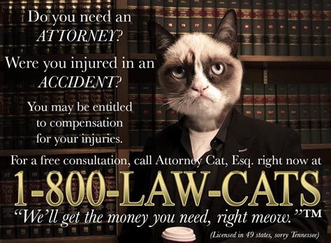 Lawyer Cat Meme - need an attorney call 1 800 law catsin funny cats picture