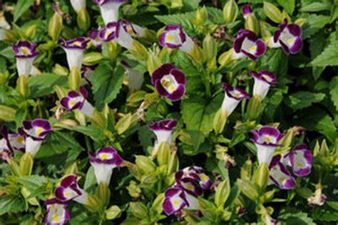 flowering perennials for shade gardens flowering perennials for sun and shade thin