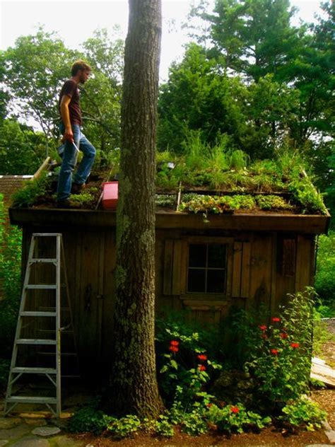 Living Roof Shed by Living Roof Via Wilder Potting Shed Living Roof