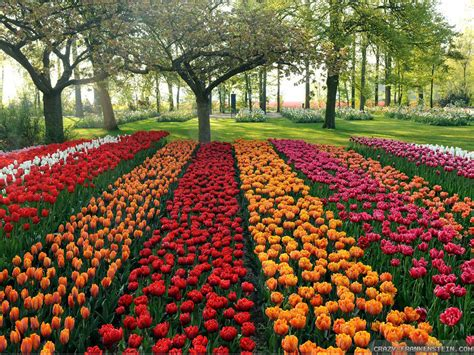 Amazing Flower Garden Beautiful Flower Garden Wallpapers Best Hd Wallpapers