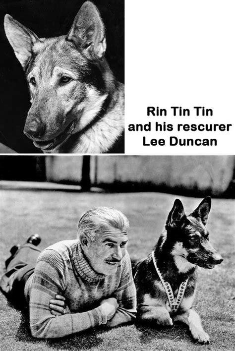 film cowboy rin tin tin rin tin tin sept 1918 aug 1932 was a male german