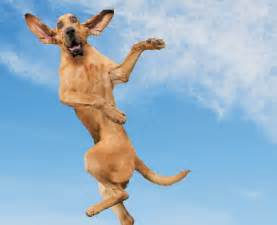Mountain Home Interiors 10 flying dogs that will make you smile quarto homes
