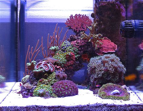 live rock aquascape 75 gallon reef tank evergreen blue