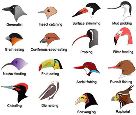 Essay On Different Types Of Birds In by Jee Jee Advanced Cbse Neet Iit Free Study Packages Test Papers Counselling Ask