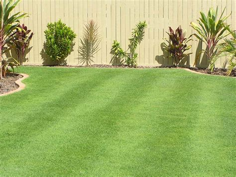 blue couch turf brisbane queensland blue couch turf varieties tinamba turf